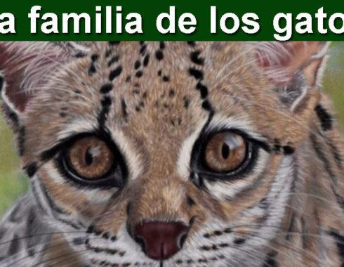 La familia de los gatos